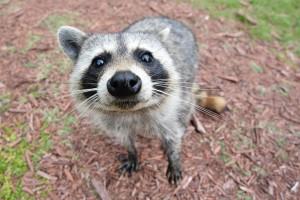 Julian Omidi talks about animal intelligence